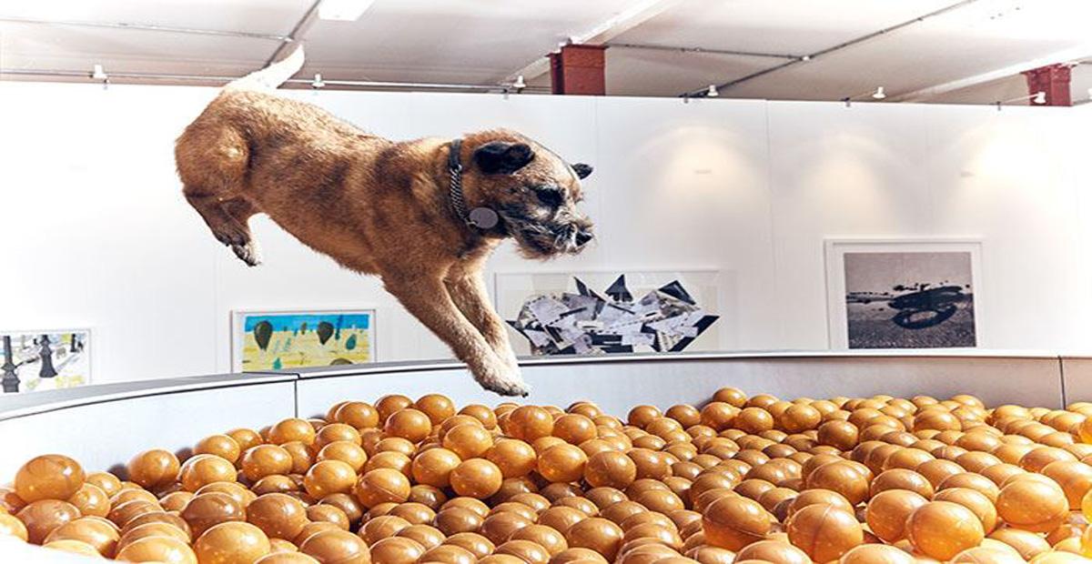 mostra-cani2