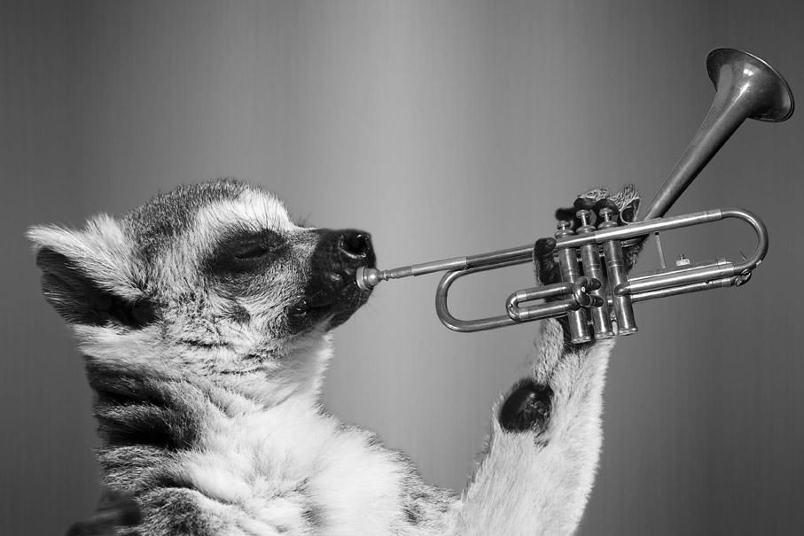 Animale musicista immagine per WhatsApp divertente