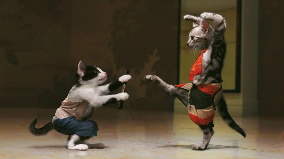 Immagine divertente 2017 gatti che combattono