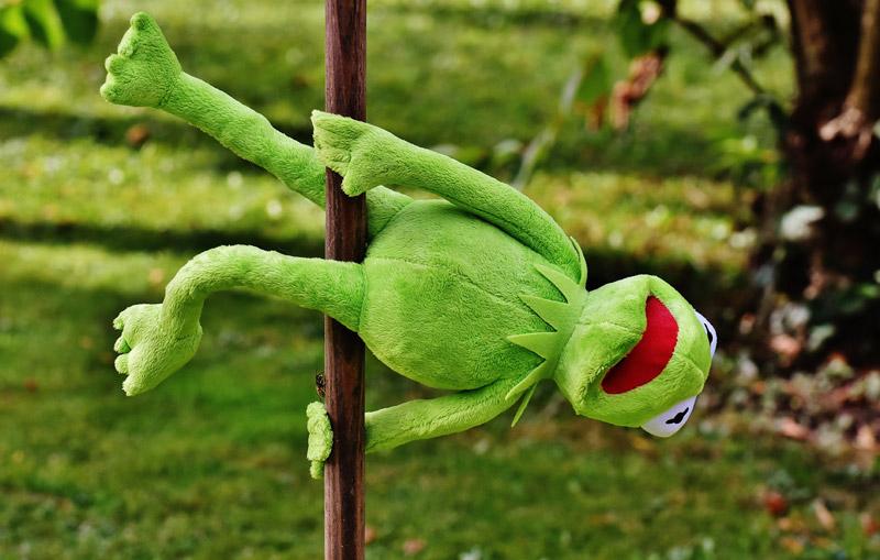 Foto divertente per Whatsapp muppet verde