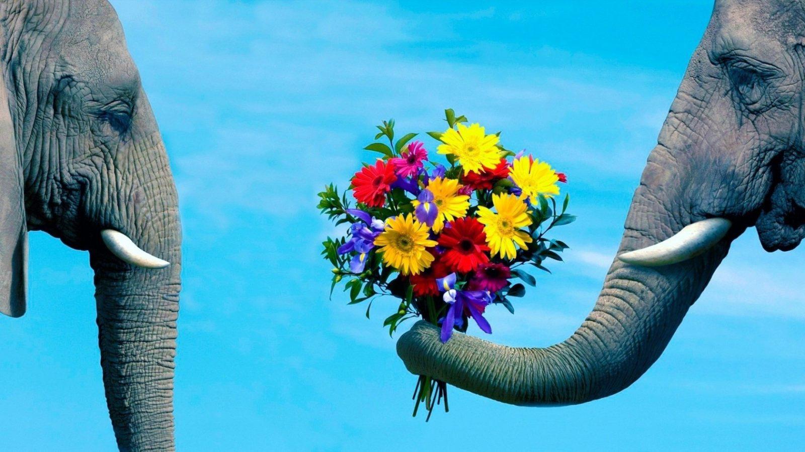 whatsapp immagini 2017 foto divertente elefante che dona mazzo di fiori