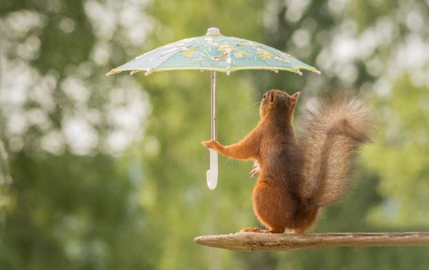 Foto divertente 2017 scoiattolo con ombrello