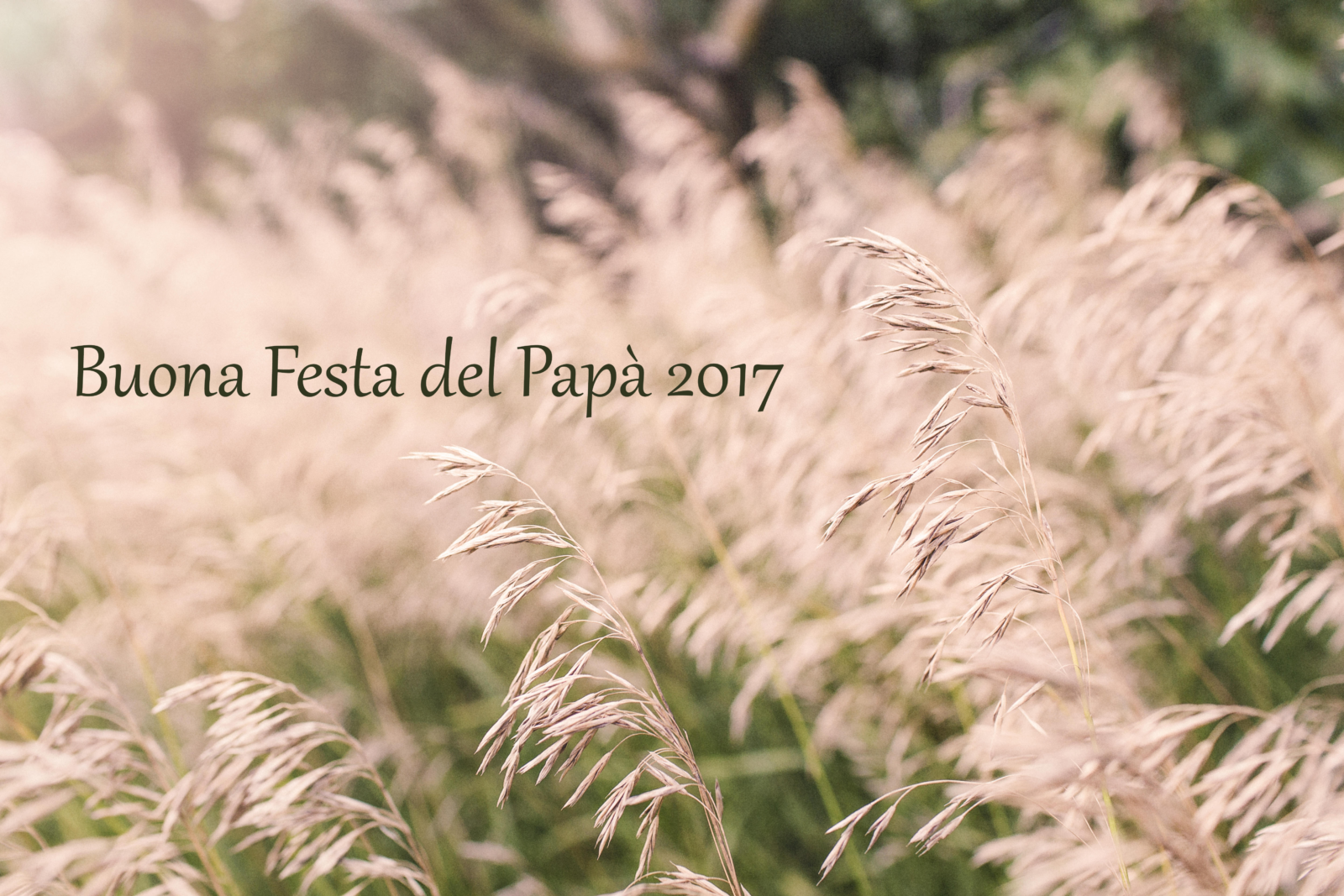 auguri-festa-del papa-immagini-2017-9