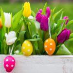 fiori pasquali per auguri