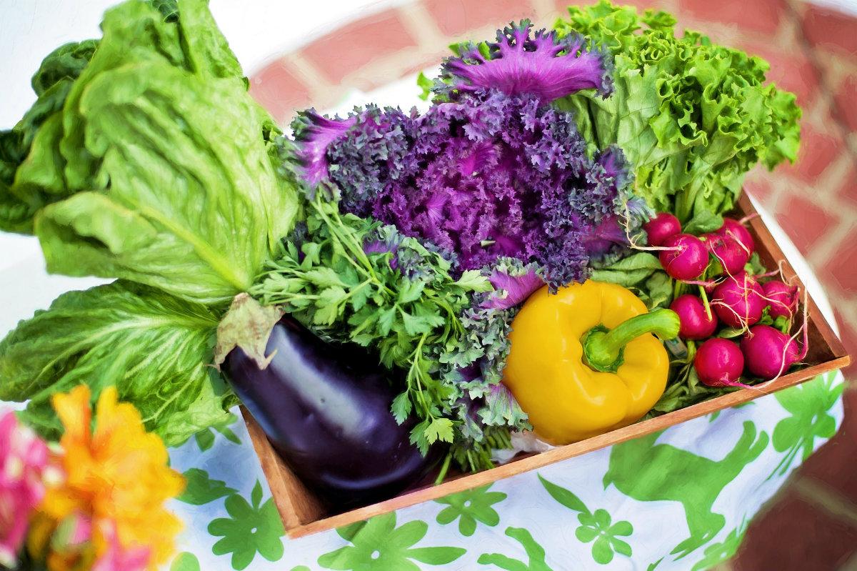 Grow the Planet: il social network per coltivare frutta e verdura