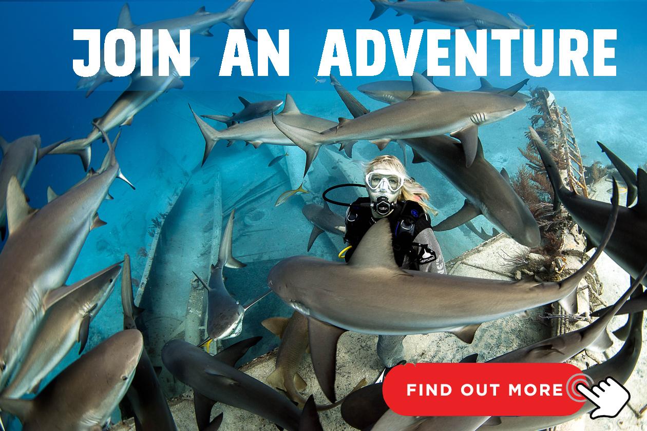 Scuba Diver App: ecco le 5 migliori app dedicate alla subacquea