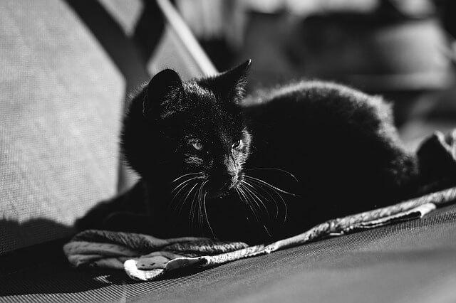 Black Cat Day 2017