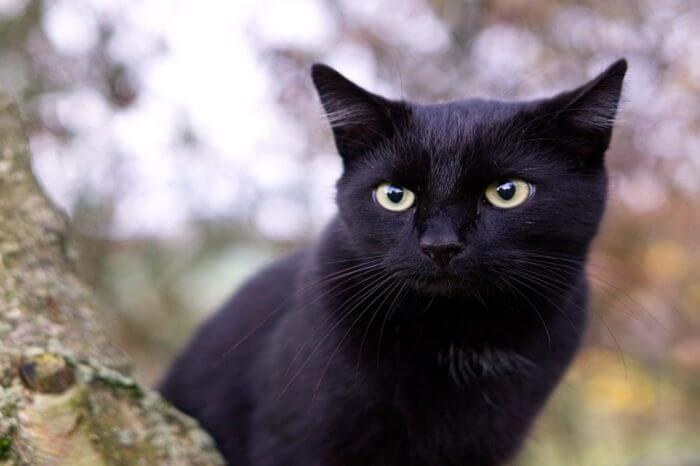 Black Cat Day 2017, gatti neri da amare