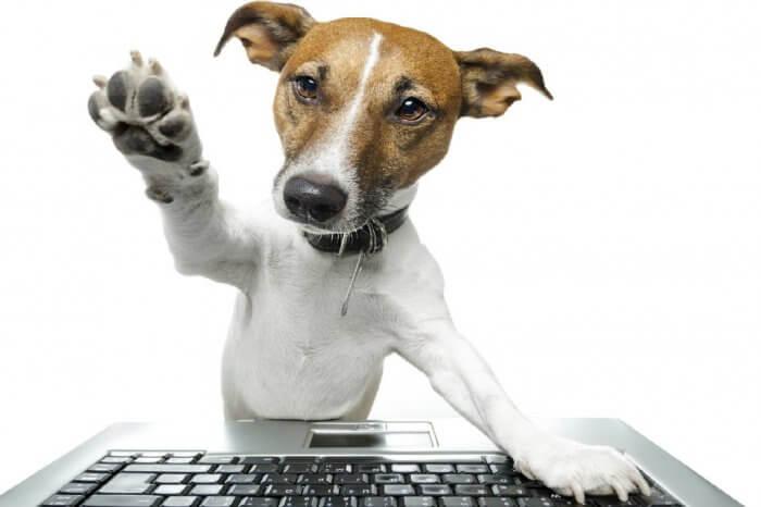 +PetTag: la funzione per condividere la vita degli animali domestici