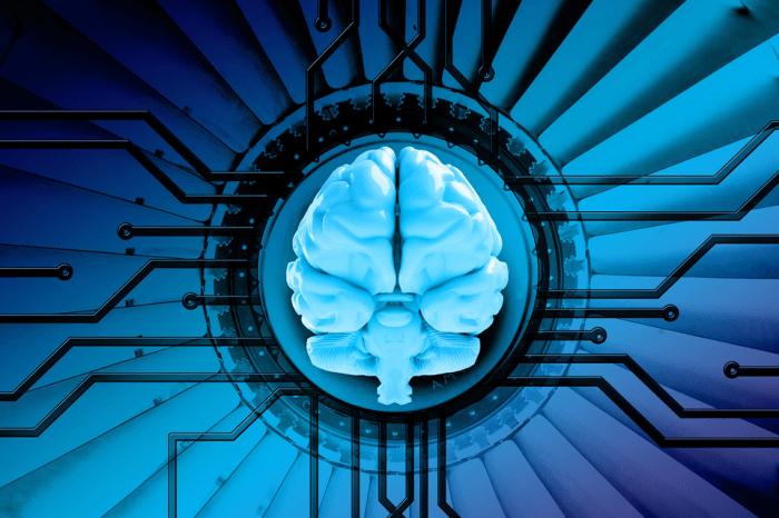 Che cos'è il Social Network dei cervelli?